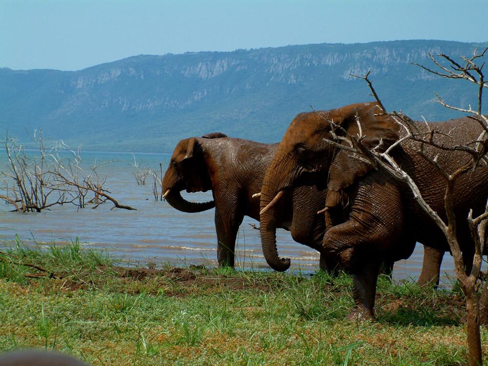 AfriCamps White Elephant